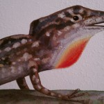 Anole lizard detail
